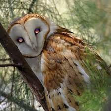 Owl 3 images