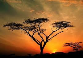 Tree 3 index
