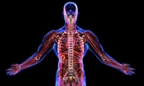 A human body pic 140976416 4009846895705965 5514702806651822549 n